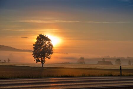 Morning dawning sun and rising sunbeams over hazy field and country road Standard-Bild