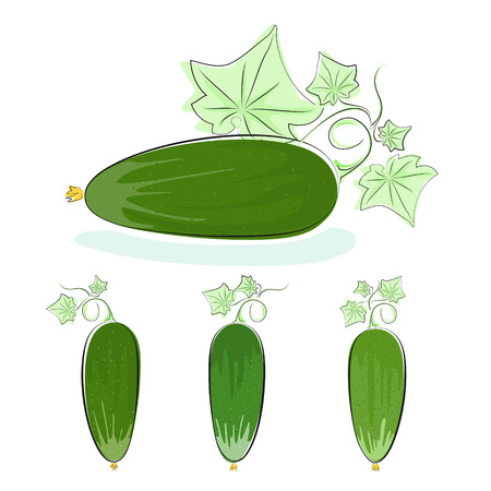 Cucumber, three kinds of cucumber with leaves, vegetables isolated on white background, vector illustration
