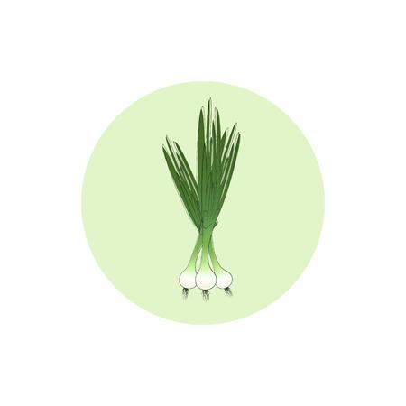 Icon green onion,  icon vegetables , vector illustration