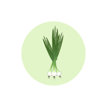 Icon green onion,  icon vegetables , vector illustration