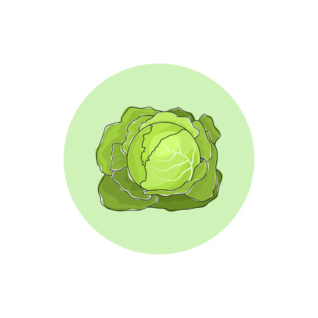 brassica: Icon cabbage  vegetable , vector illustration