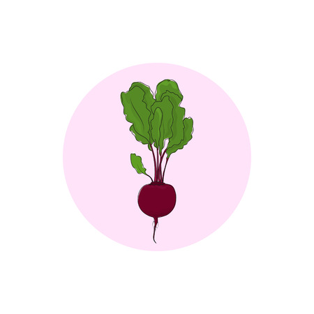 root crop: Icon beetroot , icon root vegetable, vector illustration