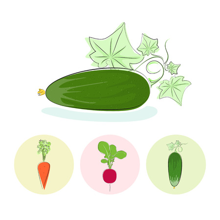 tuber: Cucumber vegetables  with leaves on a white background , set of three round colorful icons  cucumber, carrot, radish, vector illustration Illustration