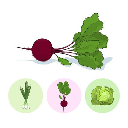 チャイブ: 白い背景の上ビート根野菜、3 つのセット ラウンド カラフルなアイコン緑オニオン、ビート、キャベツ、ベクトル イラスト