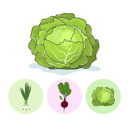 チャイブ: 白い背景に白いキャベツ野菜セット 3 ラウンドのカラフルなアイコンを緑のタマネギ、ビート、キャベツ、ベクトル イラスト  イラスト・ベクター素材