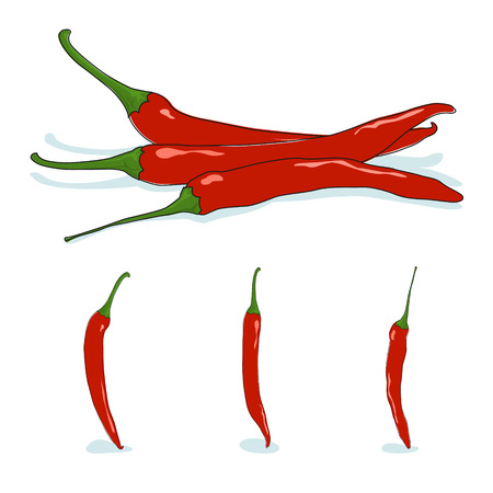 cayenne: Red hot chili pepper, cayenne pepper or guinea spice, cow-horn pepper, aleva, bird pepper, vector illustration