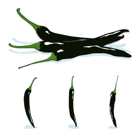 capsaicin: Pasilla chile,chile negro,  hot chili pepper, fresh dark  chilaca peppers, vector illustration