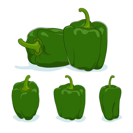 peper: Green bell pepper,three kinds of sweet pepper, capsicum on a white background, vector illustration Illustration