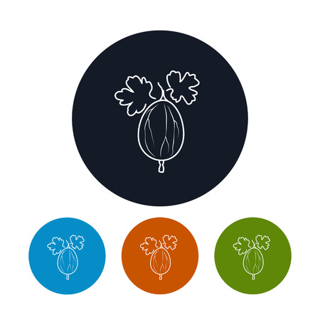 ripened: Icon Gooseberry  ,the Four Types of Colorful Round Icons Gooseberry  in the Contours, Vector Illustration