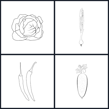 chive: Set of Vegetable Icons , Icons Cabbage, Green Onion, Pepper Chili,  Cucumber  in the Contours, Vector Illustration Illustration