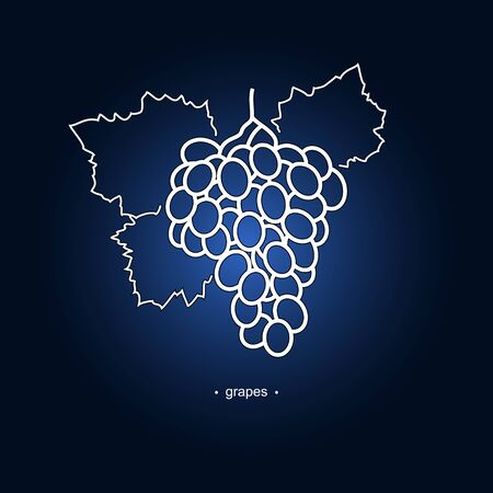 ripened: Image Grapes in the Contours on a Dark Blue Background, Vector Illustration Illustration