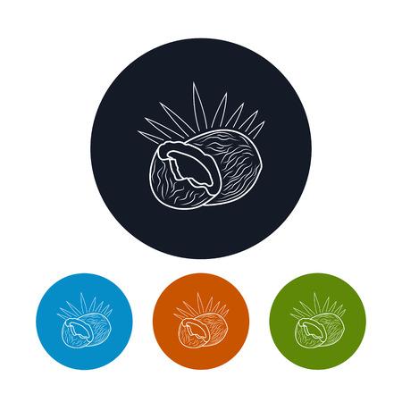 cocotier: Icône de noix de coco, les quatre types de Colorful icônes rondes Coco dans les contours, Illustration