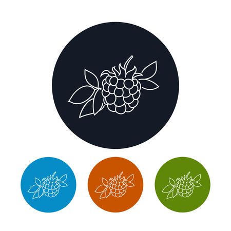 ripened: Icon Blackberry  ,the Four Types of Colorful Round Icons  Dewberry,  in the Contours, Vector Illustration