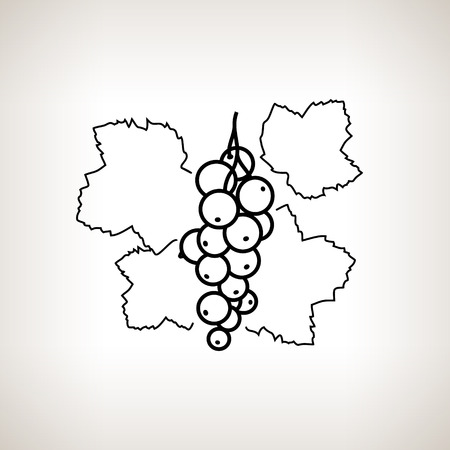 red currant: Redcurrant ,Image Red Currant in the Contours on a Light Background, Black and White Vector Illustration Illustration
