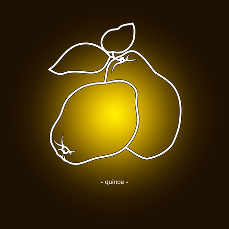 quince: Image Quince in the Contours on a Dark Yellow Background, Vector Illustration