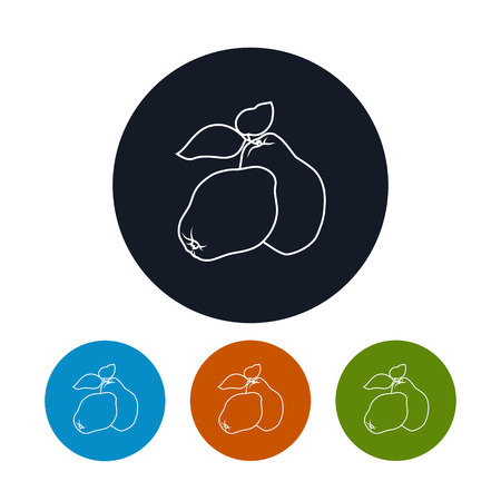 quince: Icon Quince ,the Four Types of Colorful Round Icons  Apple Quince  in the Contours, Vector Illustration