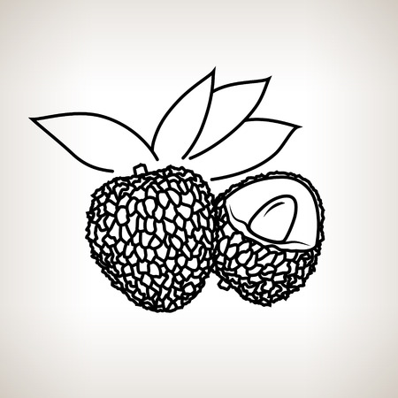 ripened: Lichee ,Image Lichi in the Contours on a Light Background, Black and White Vector Illustration Illustration