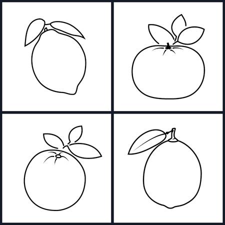 mandarin orange: Set of Fruit Icons ,Icon Orange,Lemon,Mandarin,Lime  in the Contours on a White Background