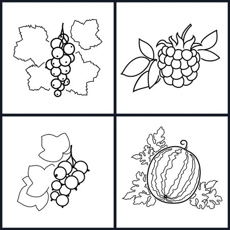 dewberry: Set of Berry Icons ,Icon Blackcurrant, Watermelon, Redcurrant,Blackberry   in the Contours on a White Background , Vector Illustration Illustration