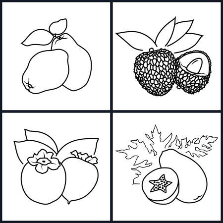 lichee: Set of Fruit Icons ,Icon Persimmon, Papaya, Quince,  Lichee   in the Contours on a White Background , Vector Illustration Illustration