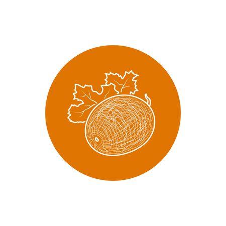 melon: Melon, Colorful Round Icon Melon