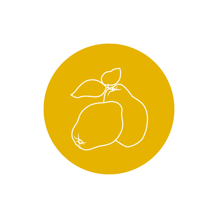 quince: Quince, Colorful Round  Icon Quince Illustration