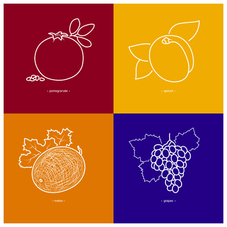 contours: Icon Melon,Grapes,Pomegranate,Apricot  in the Contours on a  Colored Background, Vector Illustration