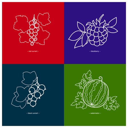 blackberry: Icon Blackcurrant,Watermelon,Redcurrant,Blackberry   in the Contours on a  Colored Background, Vector Illustration