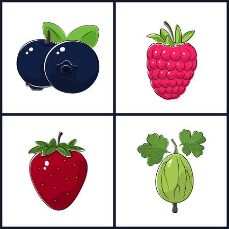 fruitage: Blueberries, Raspberries, Strawberry,Gooseberry , Isolated on White Background ,Set of Fruit Icons , Vector Illustration