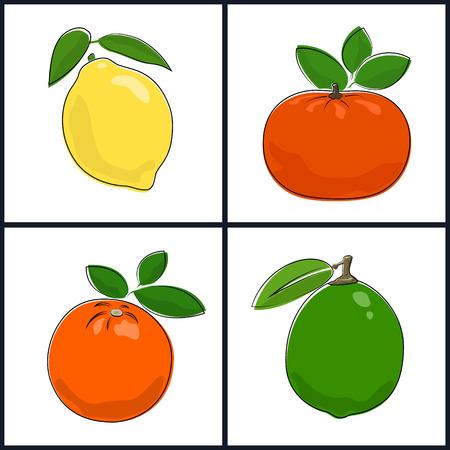 mandarin orange: Lemon,Orange,Mandarin,Lime , Isolated on White Background , Set of Fruit Icons , Vector Illustration