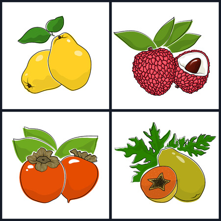 persimmon: Papaya,  Persimmon, Quince,  Lichee , Isolated on White Background , Set of Fruit Icons , Vector Illustration