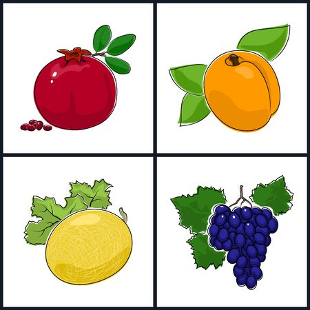pomegranate: Apricot, Pomegranate,Melon,Grapes  , Isolated on White Background , Set of Fruit Icons , Vector Illustration
