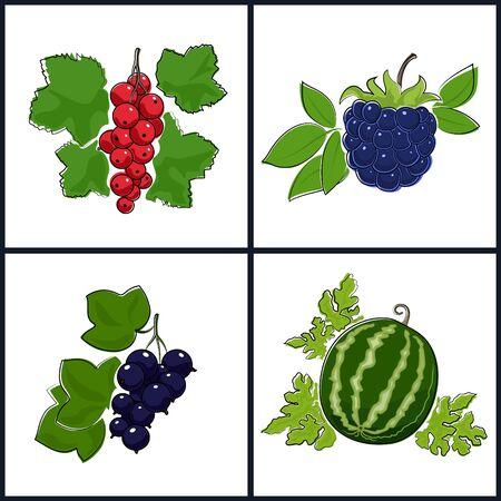 fruitage: Redcurrant,Blackcurrant,Watermelon,Blackberry , Isolated on White Background , Set of Fruit Icons , Vector Illustration Illustration