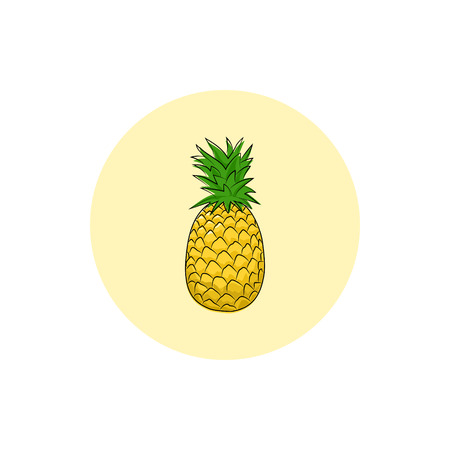 ananas: Pineapple ,Round Icon Colorful Ananas, Fruit Icon, Vector Illustration Illustration