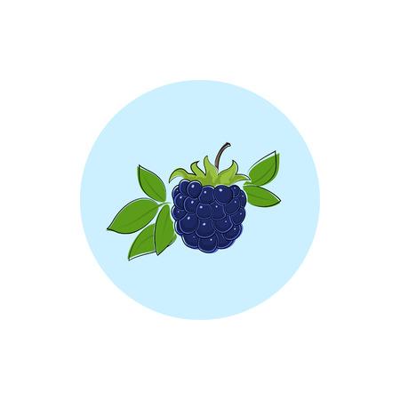 dewberry: Blackberry ,Round Icon Colorful Dewberry, Fruit Icon, Berry Icon , Vector Illustration Illustration