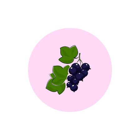 blackcurrant: Blackcurrant ,Round Icon Colorful Blackcurrant, Fruit Icon, Berry Icon , Vector Illustration