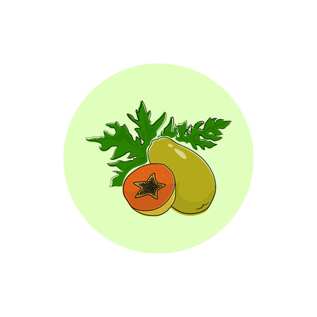 papaw: Papaya , Round Icon Colorful Pawpaw , Fruit Icon, Vector Illustration Illustration