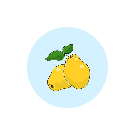 quince: Quince , Round Icon Colorful Quince , Fruit Icon, Vector Illustration Illustration