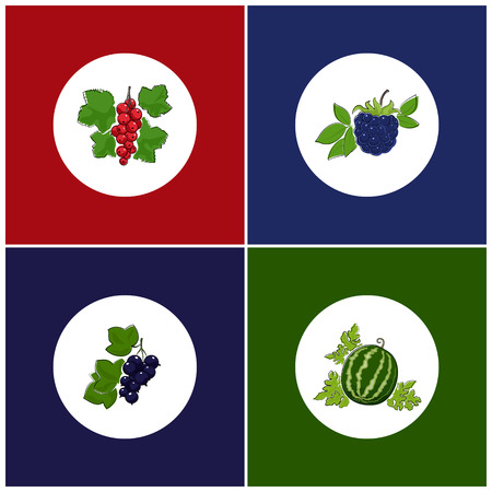 dewberry: Fruit Icons, Round White Berry Icons on Colorful Background, Redcurrant Icon, Blackberry Icon , Watermelon Icon, Blackcurrant Icon, Vector Illustration