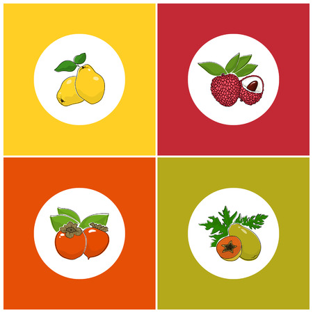 lichee: Fruit Icons, Round White Berry Icons on Colorful Background, Papaya Icon,  Lichee Icon , Persimmon Icon, Quince Icon, Vector Illustration Illustration
