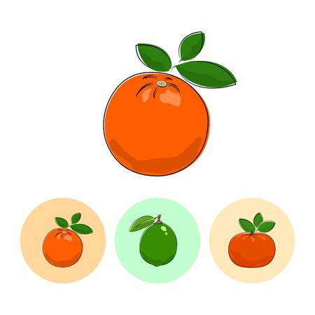 mandarin: Citrus Orange  on White Background , Set of Three Round Colorful Icons Orange, Lime and Mandarin , Vector Illustration
