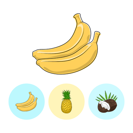 fruitage: Fruit  Banana  on White Background , Set of Three Round Colorful Icons Banana, Pineapple and Coconut , Vector Illustration Illustration