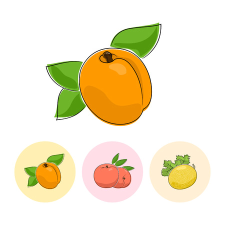 fruitage: Fruit Apricot  on White Background , Set of Three Round Colorful Icons Apricot, Peach and Melon , Vector Illustration