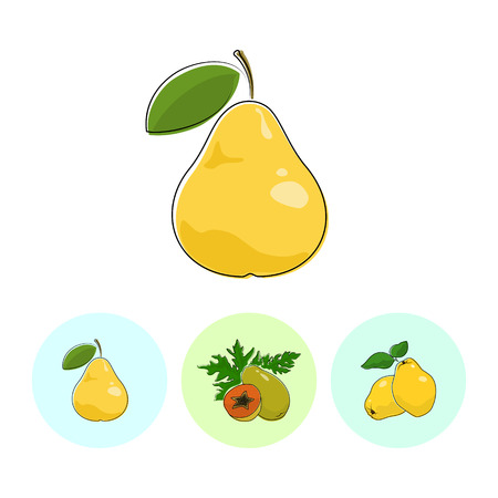 quince: Fruit Pear  on White Background , Set of Three Round Colorful Icons Pear , Papaya and Quince , Vector Illustration