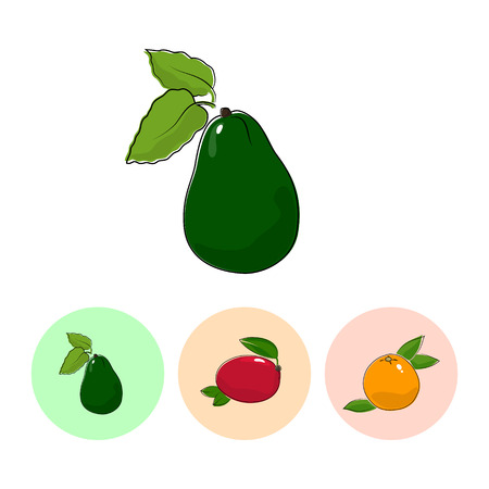 fruitage: Fruit  Avocado   on White Background , Set of Three Round Colorful Icons Avocado, Mango and Grapefruit , Vector Illustration