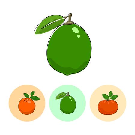 fruitage: Citrus Lime  on White Background , Set of Three Round Colorful Icons Orange, Lime and Mandarin , Vector Illustration