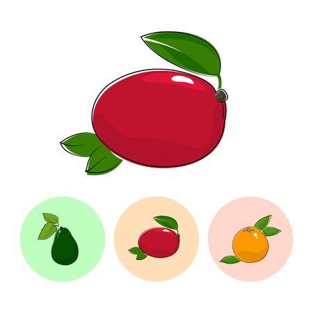 fruitage: Fruit  Mango   on White Background , Set of Three Round Colorful Icons Avocado, Mango and Grapefruit , Vector Illustration