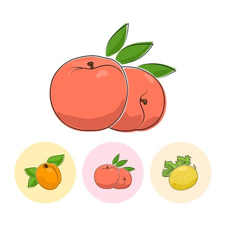 fruitage: Fruit Peach  on White Background , Set of Three Round Colorful Icons Apricot, Peach and Melon , Vector Illustration