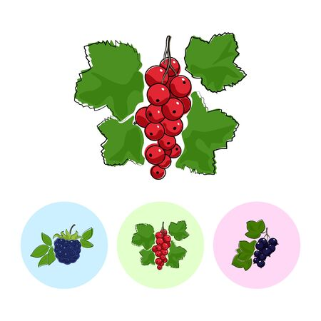 red currant: Berry Red Currant  on White Background , Set of Three Round Colorful Icons Blackberry, Redcurrant and Blackcurrant , Vector Illustration Illustration