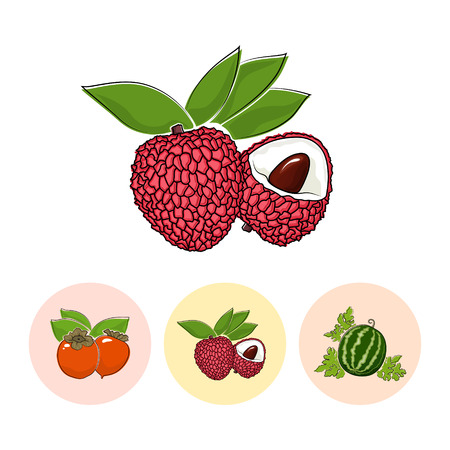 lichee: Fruit   Lichee  on White Background , Set of Three Round Colorful Icons Persimmon , Lichee and  Watermelon , Vector Illustration